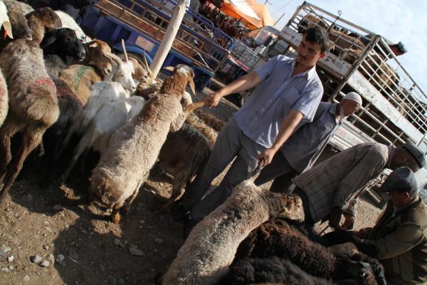 Beestenmarkt Kashgar