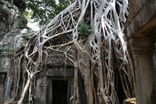 Drukke poort bij Jungle tempel