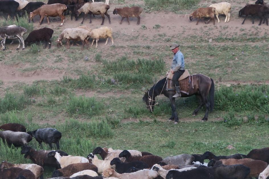 Pa de Cowboy