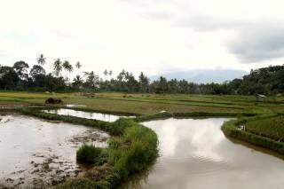 Rijstvelden Sumatra